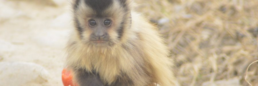 59 animales con la esperanza de un mejor  hábitat