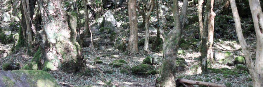 La realidad en los acuíferos de Tarija: ¡Sin bosques no hay agua!