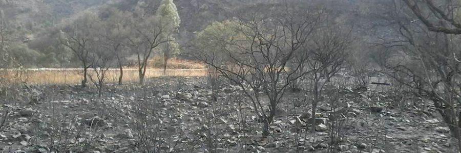 Se necesitan 10 millones de árboles para recuperar flora de Sama